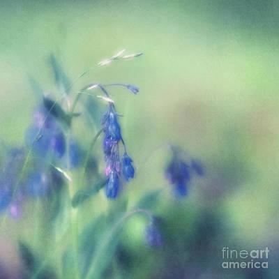 Painterly Photograph - Bluebells by Priska Wettstein