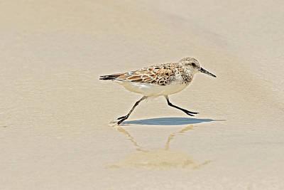 Photograph - Galapagos Mockingbird In Santa Cruz Island. by Marek Poplawski