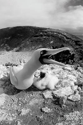 Photograph - Galapagos_103-19 by Craig Lovell