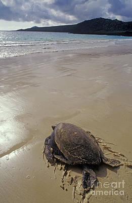 Photograph - Galapagos_36-15 by Craig Lovell