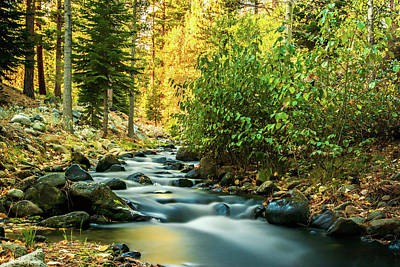 Photograph - Galena Creek by Maria Coulson