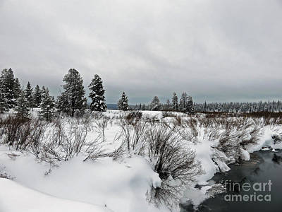 Photograph - Gallatin Nf Wy by Cindy Murphy - NightVisions