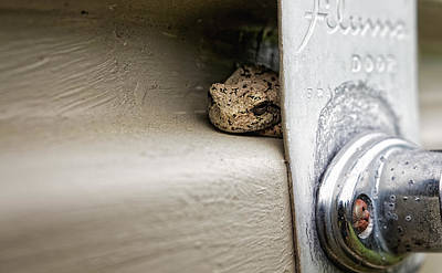 Art Print featuring the photograph Garage Door Tree Frog by Lars Lentz
