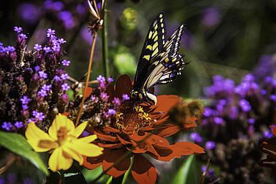 Gerbera Photograph - Garden Beauty by Garry Gay