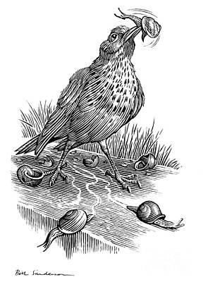 Garden Bird Catching Snails, Artwork Art Print