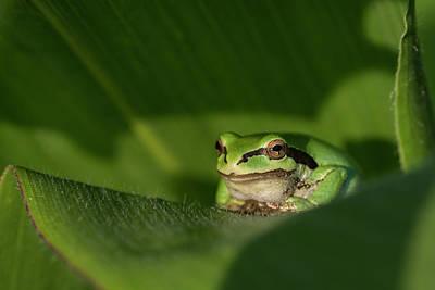 Photograph - Garden Guardian by Robert Potts