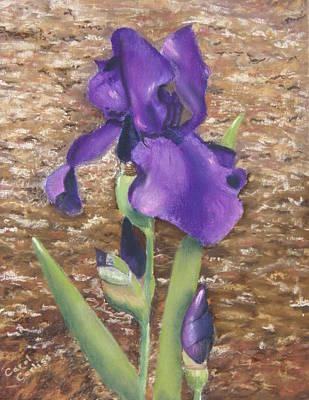 Pastel - Garden Iris by Carol Corliss