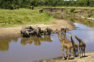 Elephant Photograph - Garden Of Eden by Michele Burgess