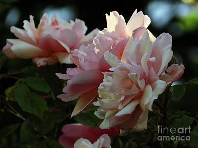 Photograph - Garden Roses by Kim Tran