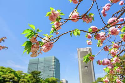 Photograph - Garden Sakura Tokyo by Benny Marty