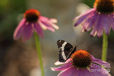 Photograph - Garden Visitor by Alana Ranney