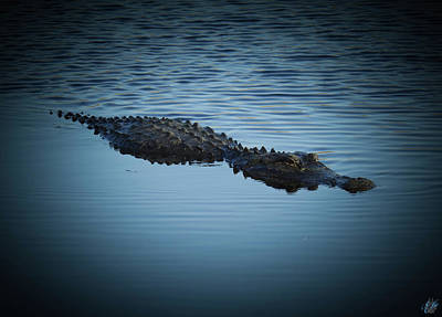 Alligators Photograph - Gator Blue by Elie Wolf