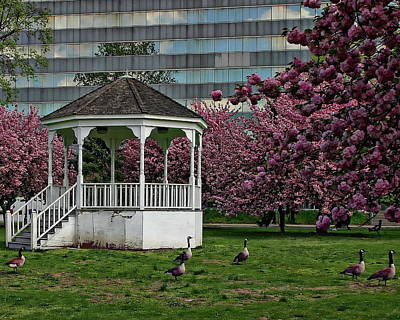Photograph - Gazebo In The Park by Anthony Dezenzio