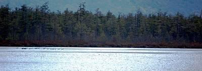 Photograph - Geese On Labrador Pond by David Lane