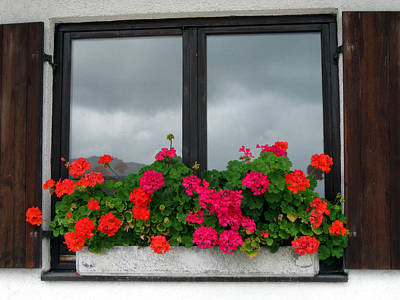 Photograph - Geranium Window by Sarah Hornsby