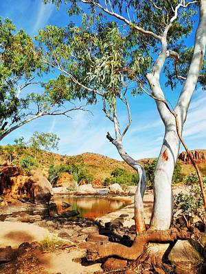 Photograph - Ghost Gum - Ormiston Gorge by Lexa Harpell