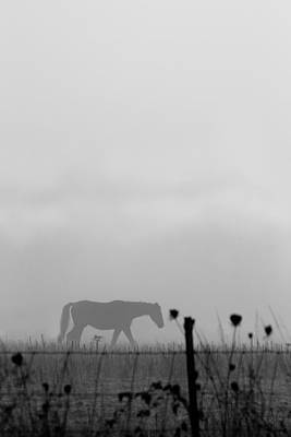 Oregon Photograph - Ghost Horse by Rebecca Cozart