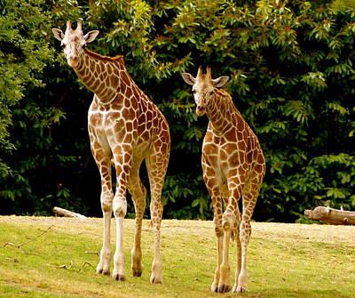 Giraffe Family Art Print by Sonja Anderson