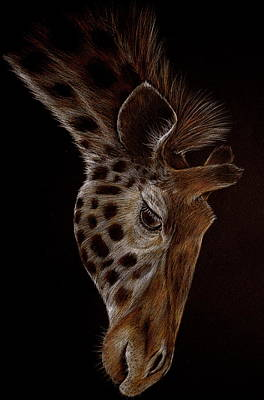 Drawing - Giraffe by Heidi Kriel
