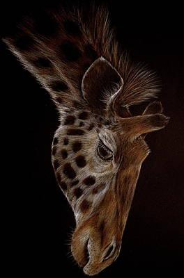 Drawing - Giraffe by Heidi Kriel