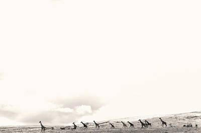 Photograph - Giraffes by Stefano Buonamici