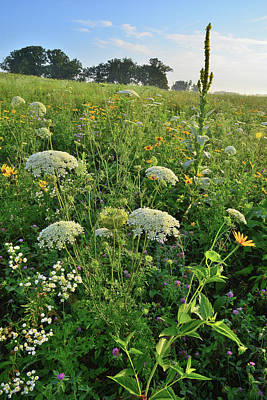 Photograph - Glacial Park Hillside Of Wildflowers by Ray Mathis