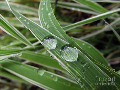 Photograph - Glass Beads On Bamboo Plant  by Kim Tran