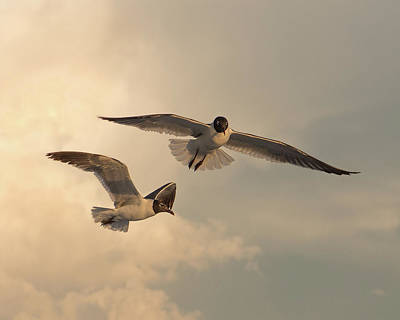 Seagull Photograph - Gliders by Don Spenner