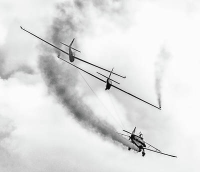 Possum Photograph - Gliders by Martin Newman