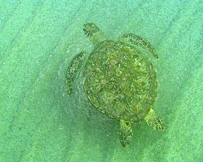 Green Sea Turtle Photograph - Gliding Green  by Kimberly Mohlenhoff