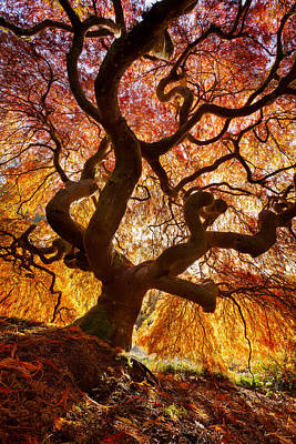 Glowing Canopy Print by Thorsten Scheuermann