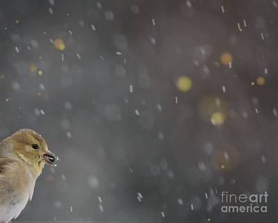 Photograph - Gold Finch by Mary-Lee Sanders
