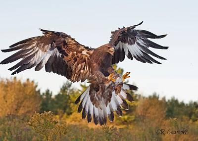 Golden Eagle Art Print by CR  Courson