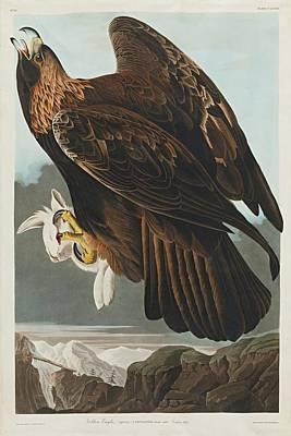 Golden Eagle Painting - Golden Eagle by John James