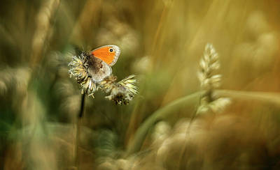 Photograph - Golden Fields by Jaroslaw Blaminsky