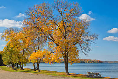 Photograph - Golden Leaves by John M Bailey
