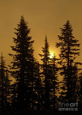 Photograph - Golden Morning by Mike Dawson