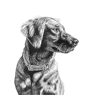 Drawing - Golden Retriever by Timothy Livingston