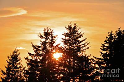 Photograph - Golden Sunset by Elaine Manley