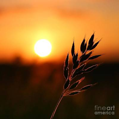 Wheat Field Sky Photograph - Golden Sunset by Franziskus Pfleghart