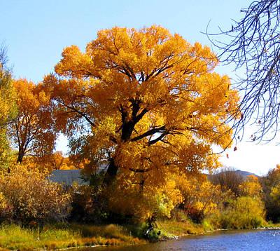 Golden Tree Art Print by Gigi Kobel