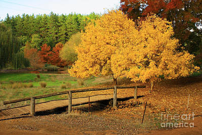 Photograph - Golden Valley Tree Park by Elaine Teague
