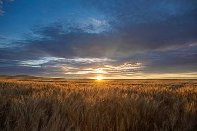 Photograph - Golden Wheat by Lynn Hopwood