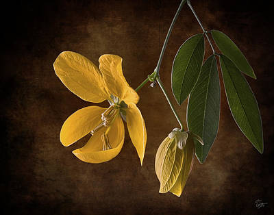 Photograph - Golden Wonder Senna by Endre Balogh