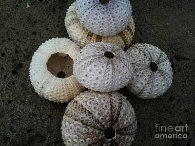 Mayflower Beach Photograph - Goree Texture - Coquille by Fania Simon