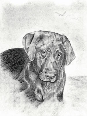 Chocolate Lab Drawing - Gozar by Mayhem Mediums