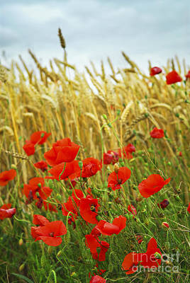 Natural Background Photograph - Grain And Poppy Field by Elena Elisseeva