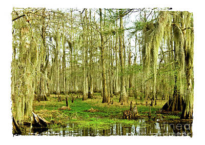 Grand Bayou Swamp  Art Print by Scott Pellegrin