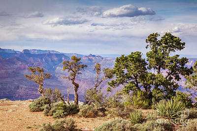 Photograph - Grand Canyon And Trees by Colin and Linda McKie