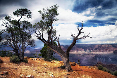 Photograph - Grand Canyon by James Bethanis